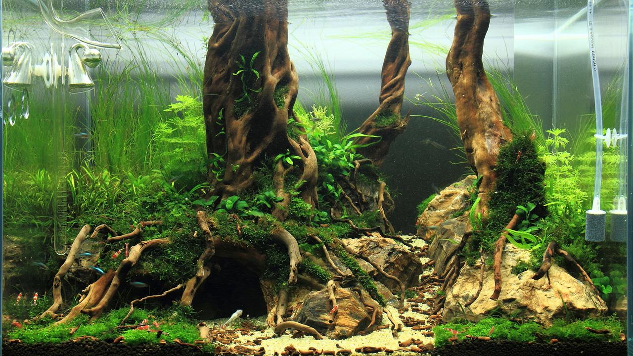 какие растения могут создавать противный запах в аквариуме